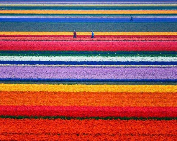 Конкурс цветов в Нидерландах